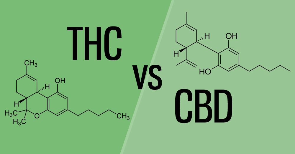 THC vs CBD Header