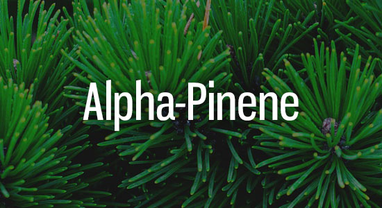 Alpha-Pinene Terpene Representation