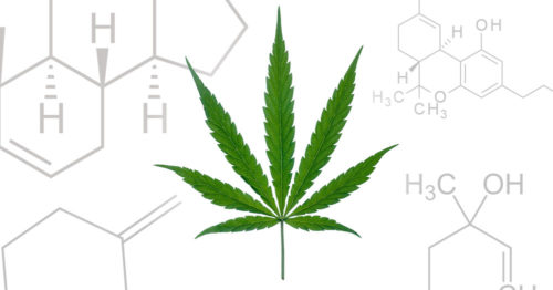 Cannabis Chemical Compounds behind Leaf