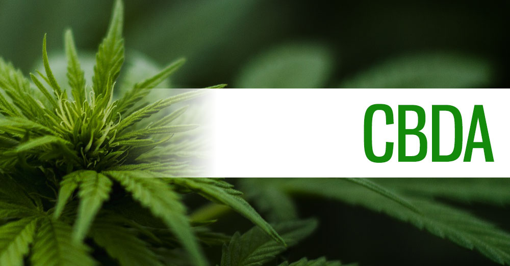 CBDA (Cannabidiolic Acid) Header