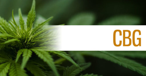 Cannabigerol (CBG) Header