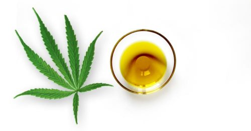 Hemp Plant and Oil