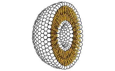 Liposome Example